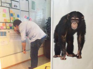 chimp på jobb