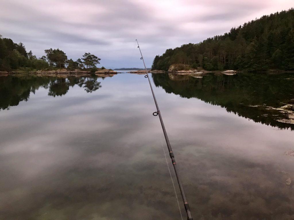 Fisk ørret talgje øy sjøørret Rogaland nær Stavanger
