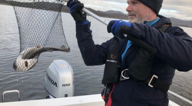Bunnfiske på grensen til artsfiske